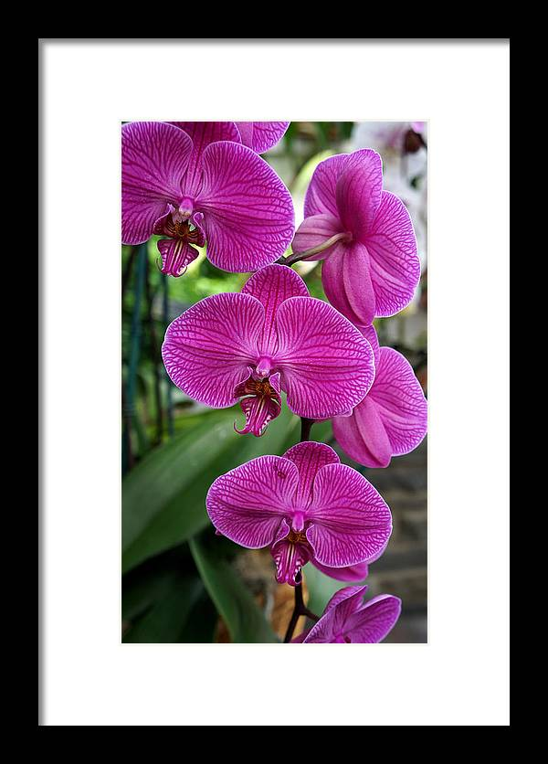 Ann Keisling Framed Print featuring the photograph Almost Deep Purple by Ann Keisling