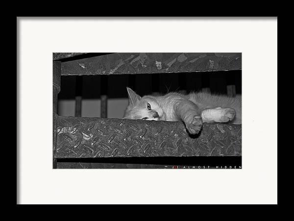 Cat Framed Print featuring the photograph Almost Hidden by Jonathan Ellis Keys