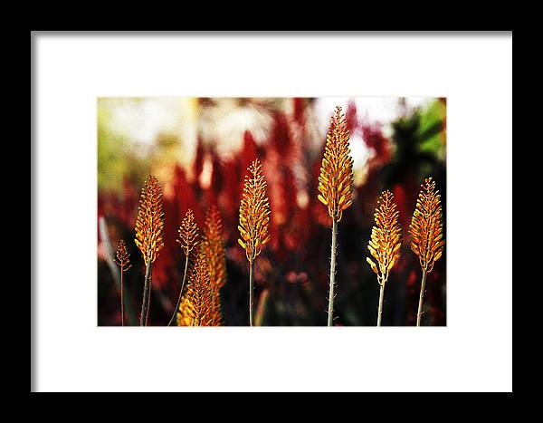 Aloe Framed Print featuring the photograph Aloe Blossoms by Richard Henne