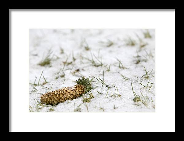 Winter Framed Print featuring the photograph Alone by Jeannie Burleson