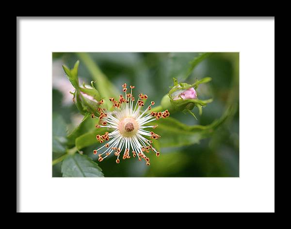 Nature Framed Print featuring the photograph Alpha And Omega by AugenWerk Susann Serfezi
