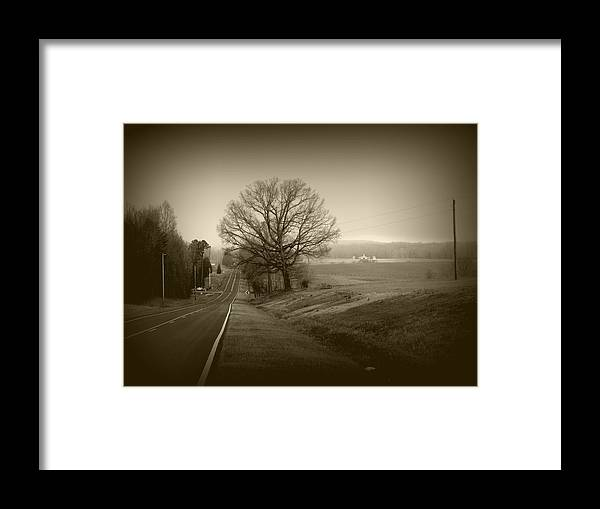 Moores Mill Rd Framed Print featuring the photograph Alpha Tree by David A Brown