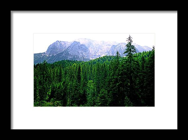Bavaria Framed Print featuring the photograph Alpine Forest by Kevin Smith
