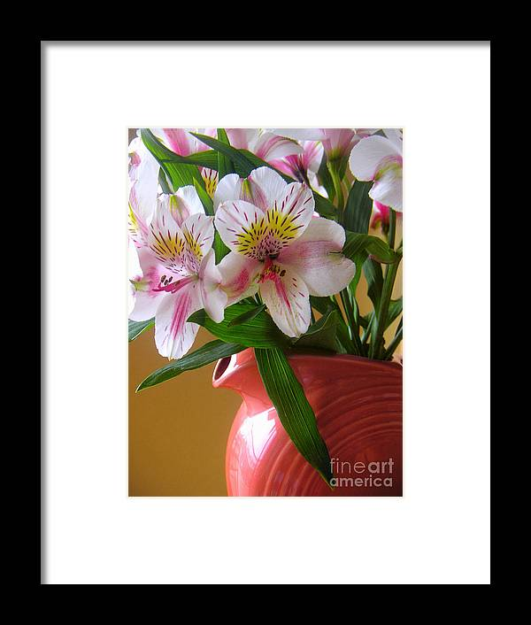 Nature Framed Print featuring the photograph Alstroemeria Fiesta by Lucyna A M Green