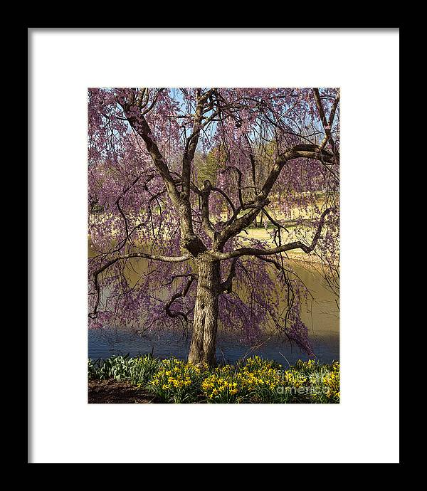 Garden Framed Print featuring the photograph Always With You by Blaine Blasdell