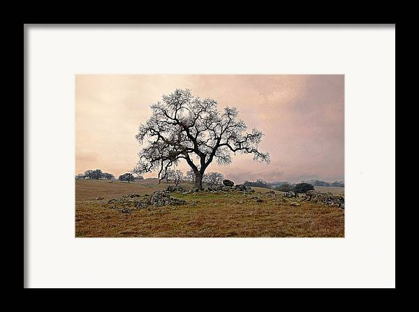 Landscape Framed Print featuring the photograph Amador Oak by M Ryan