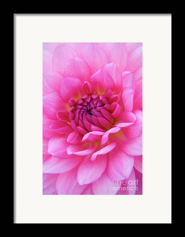 Nature Framed Print featuring the photograph Amaranthine by Julia Hiebaum