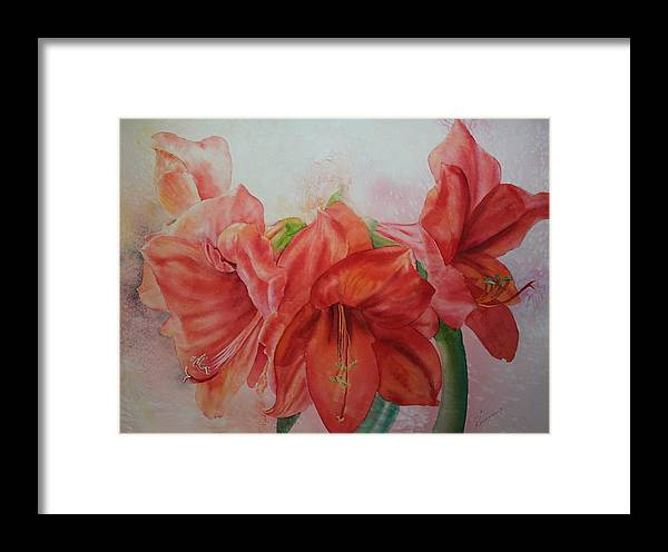 Flowers Framed Print featuring the painting Amarylis by Ruth Kamenev