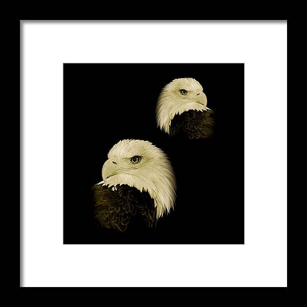 American Framed Print featuring the photograph American Eagles by Louise Fahy