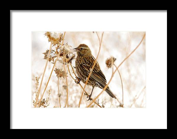 Bird Framed Print featuring the photograph American Sparrow by Dennis Hammer