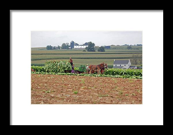 Amish Framed Print featuring the photograph Amish Farm Harvest by Joyce Huhra