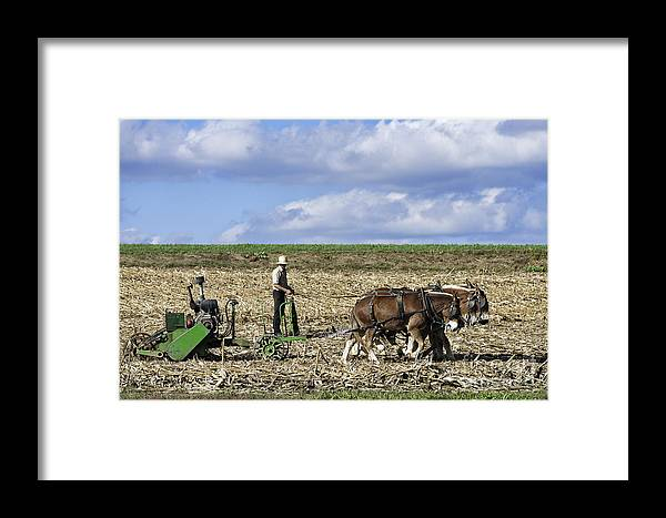 America Framed Print featuring the photograph Amish Farmer by John Greim