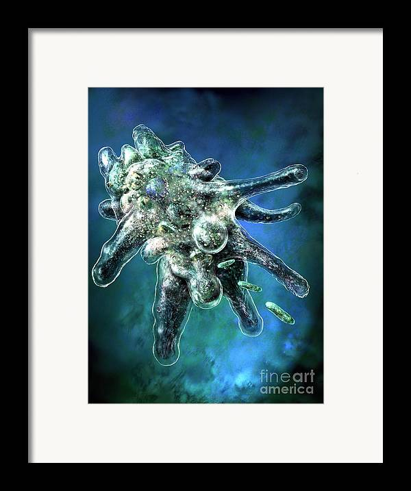 Ameba Framed Print featuring the digital art Amoeba Blue by Russell Kightley