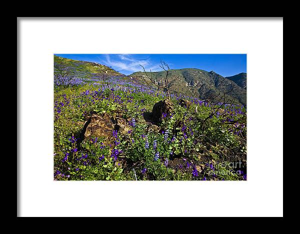 Landscape Framed Print featuring the photograph Amoung The Rocks by Greg Clure