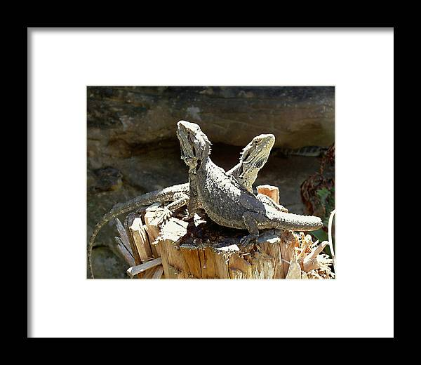 Amphion And Zethus Framed Print featuring the photograph Amphion And Zethus by Ellen Henneke