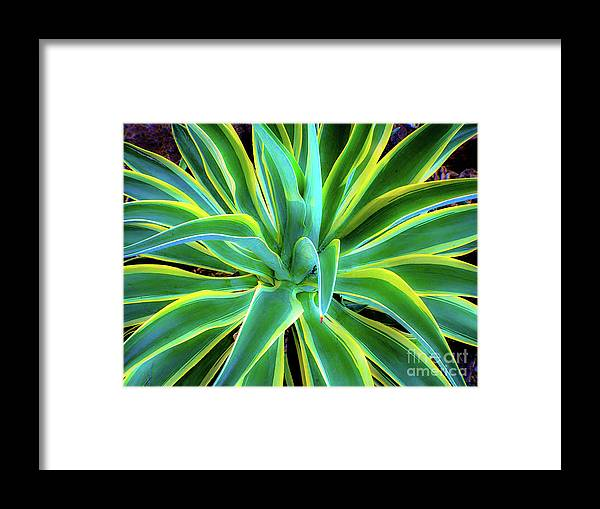 Agave Framed Print featuring the photograph An Agave In Color by D Davila