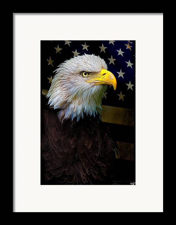 Eagle Framed Print featuring the photograph An American Icon by Chris Lord