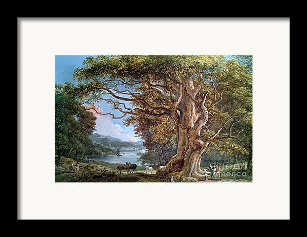 Ancient Framed Print featuring the painting An Ancient Beech Tree by Paul Sandby