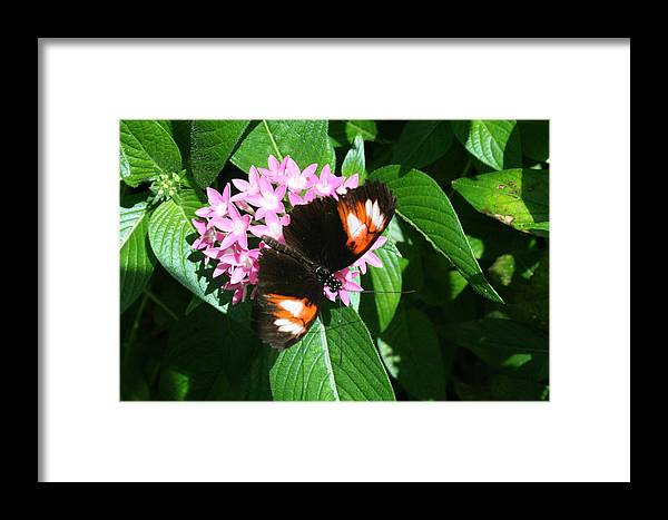 Butterfly Framed Print featuring the photograph Anchored Down - Butterfly by Lynn Michelle