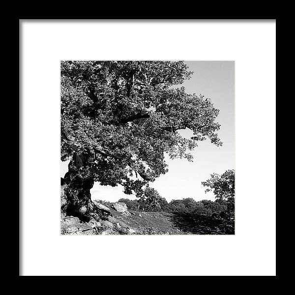 Woodland Framed Print featuring the photograph Ancient Oak, Bradgate Park by John Edwards