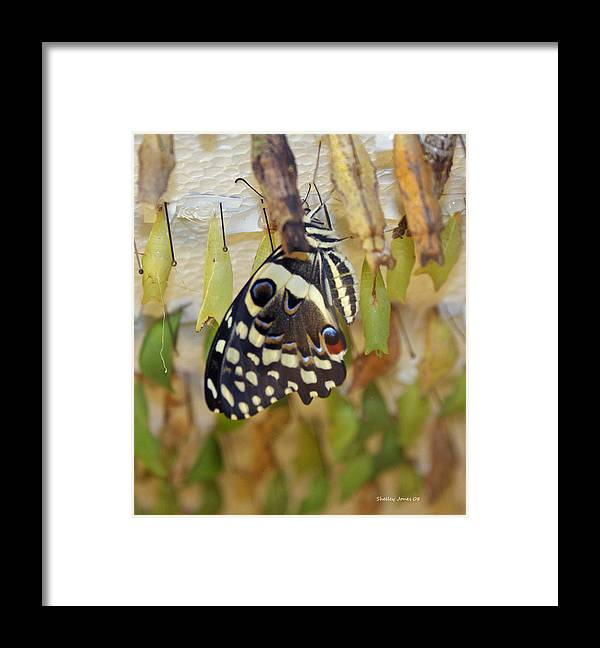 Butterfly Framed Print featuring the photograph And life begins by Shelley Jones