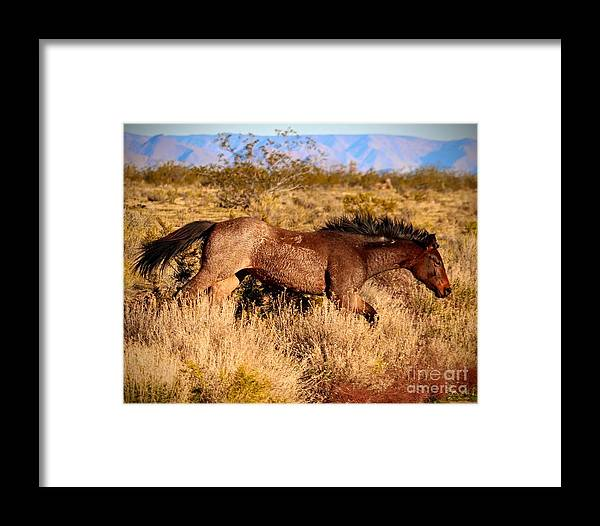 Southwest Framed Print featuring the photograph And She Was Running by Carole Ray