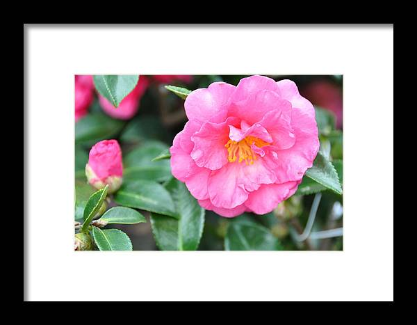 Floral Framed Print featuring the photograph And The Little One by Jan Amiss Photography