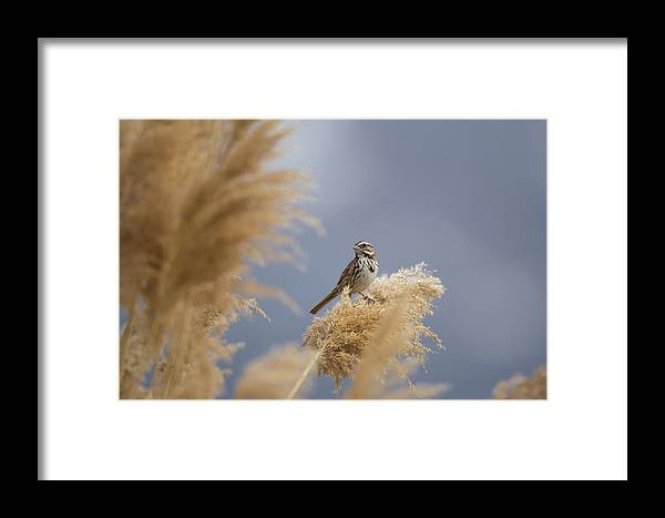Farmington Bay Framed Print featuring the photograph And You Are? by David F Hunter