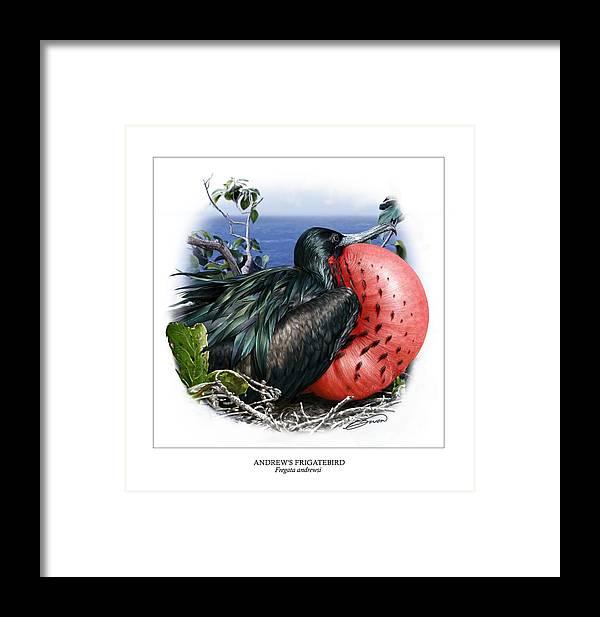 Digital Art Framed Print featuring the digital art Andrews Frigatebird Fregata Andrewsi 3 by Owen Bell