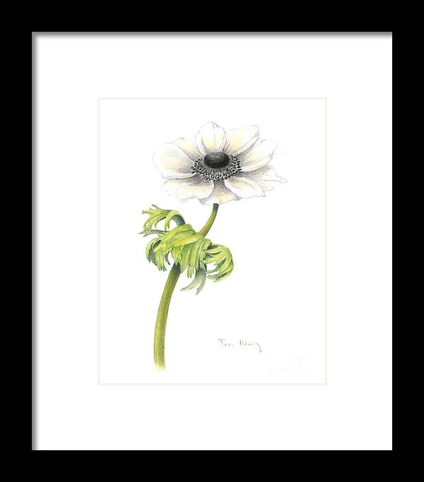 Botanical Art Framed Print featuring the painting Anemone by Fran Henig