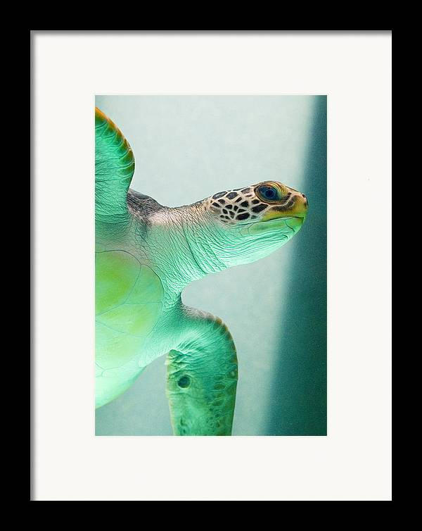 Skip Hunt Framed Print featuring the photograph Angel 2 by Skip Hunt