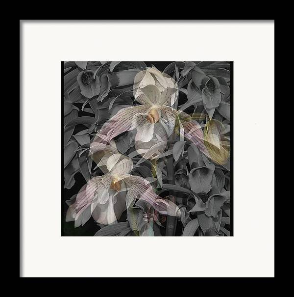 Orchid Framed Print featuring the photograph Angelic Hosts The Hooded Nun Orchid by Mindy Newman