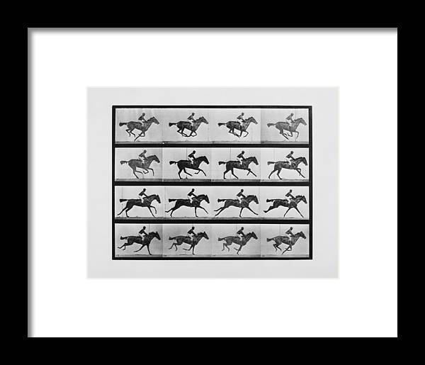 Animal Locomotion - 16 Frames Of Racehorse Annie G. Print Framed ...