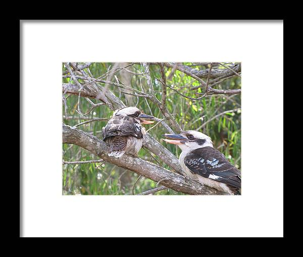 Wildlife Framed Print featuring the photograph Animated Discussion by Derek Donoghue