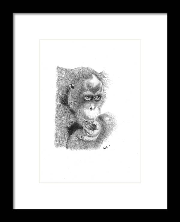 Animals Framed Print featuring the drawing Annie by Rosanna Maria