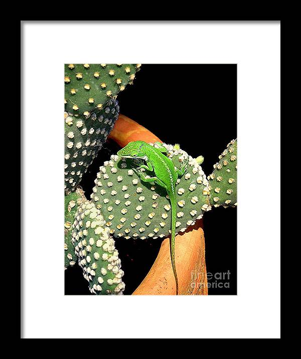 Nature Framed Print featuring the photograph Anole Hanging Out With Cactus by Lucyna A M Green