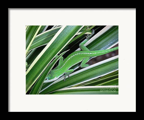 Nature Framed Print featuring the photograph Anole Hiding In Spider Plant by Lucyna A M Green
