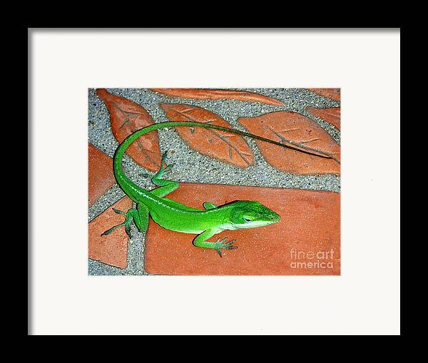 Nature Framed Print featuring the photograph Anole On Chair Tiles by Lucyna A M Green
