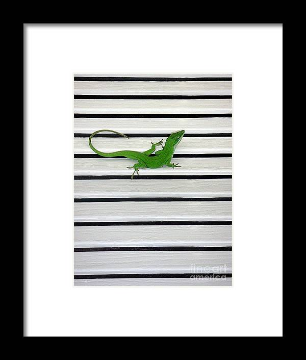 Nature Framed Print featuring the photograph Anole Shuttered Out by Lucyna A M Green