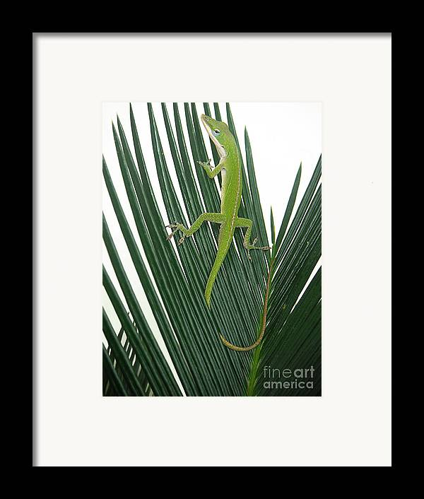 Nature Framed Print featuring the photograph Anole With Palm - Cautious by Lucyna A M Green