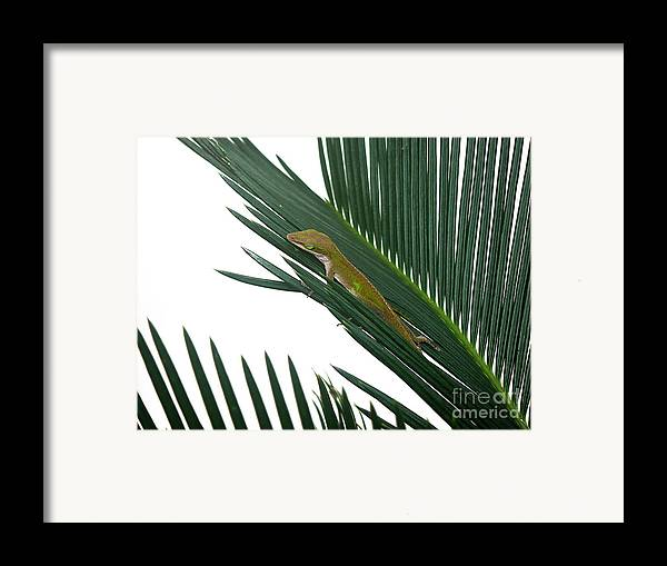 Nature Framed Print featuring the photograph Anole With Palm - Coy by Lucyna A M Green
