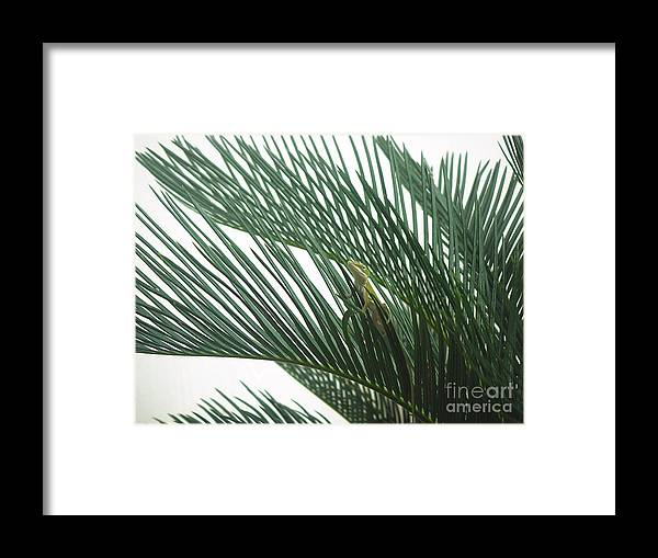 Nature Framed Print featuring the photograph Anole With Palm - Entangled by Lucyna A M Green