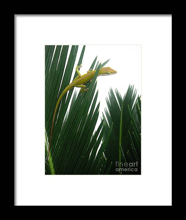Nature Framed Print featuring the photograph Anole With Palm - Flexible by Lucyna A M Green