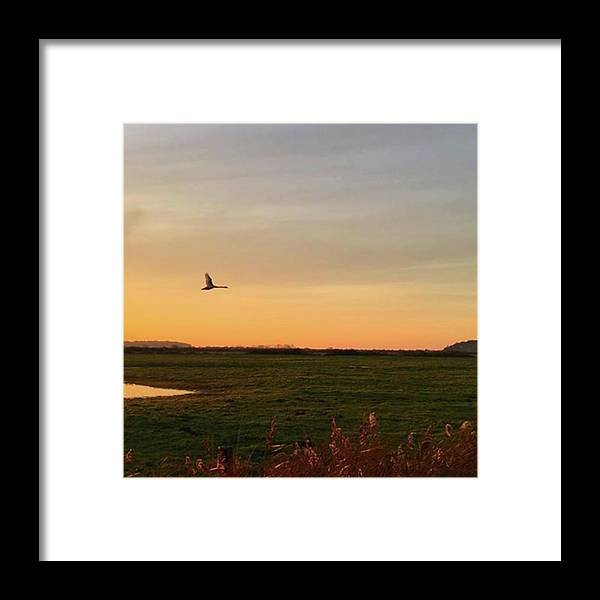 Natureonly Framed Print featuring the photograph Another Iphone Shot Of The Swan Flying by John Edwards