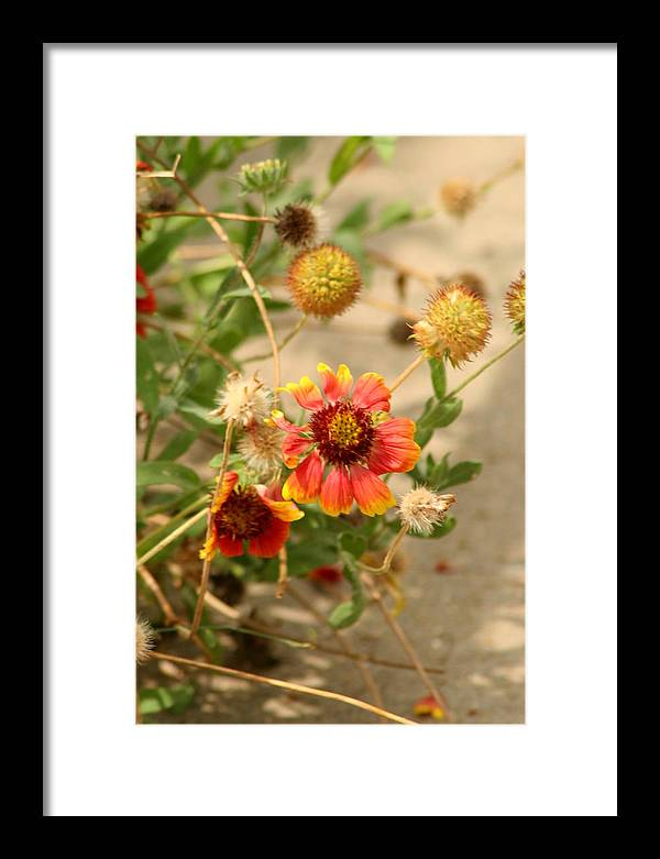 Flower Framed Print featuring the photograph Another Sort by ShadowWalker RavenEyes Dibler