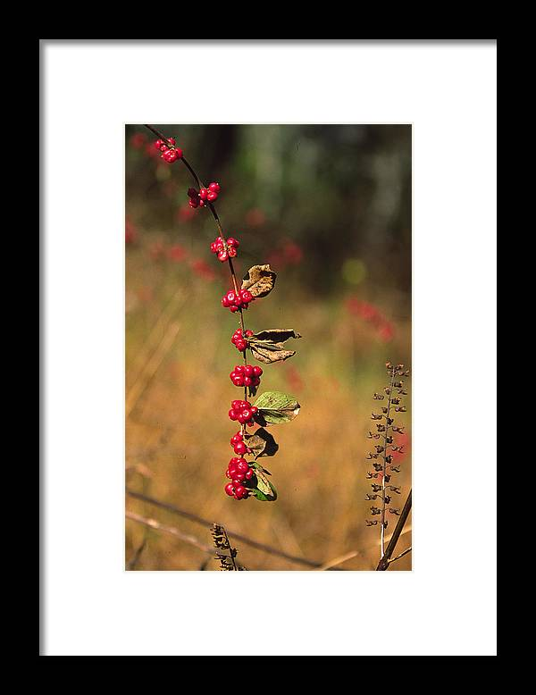 Fall Colors Framed Print featuring the photograph Another Year by Randy Oberg