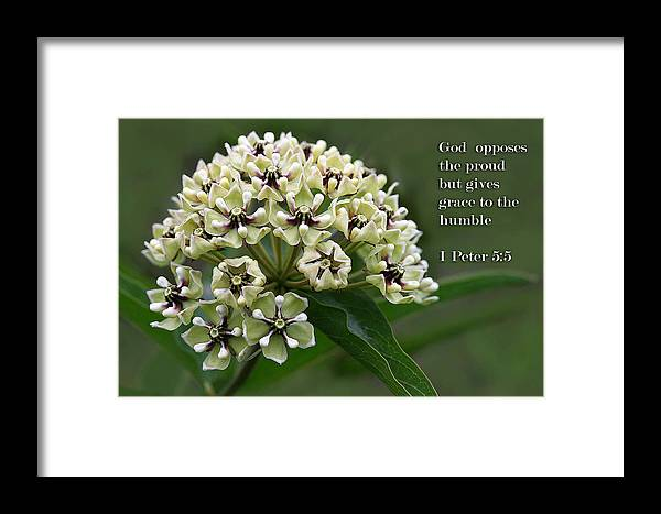 Scripture Framed Print featuring the photograph Antelope Horns Wildflower With Scripture by Linda Phelps