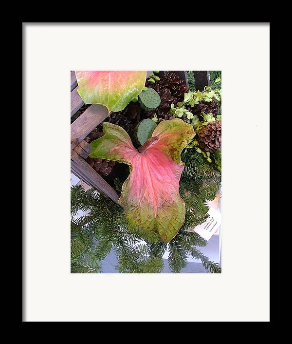 Antherium Framed Print featuring the photograph Antherium Giant by Mindy Newman