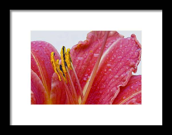 Nature Framed Print featuring the photograph Anthers by Robert OP Parrish