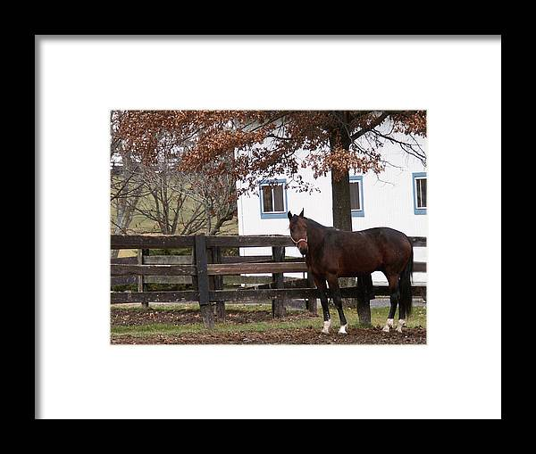 Horse Framed Print featuring the photograph Anticipation by Chuck Shafer